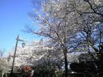 蚕糸の森0804012