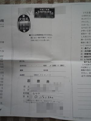家族パセリちゃんP1070628