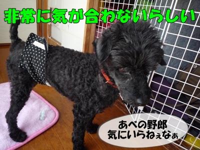 柳沢シンゴP1090082