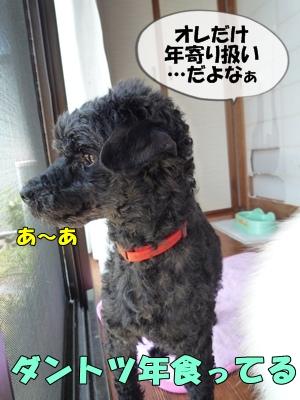 柳沢シンゴP1090084