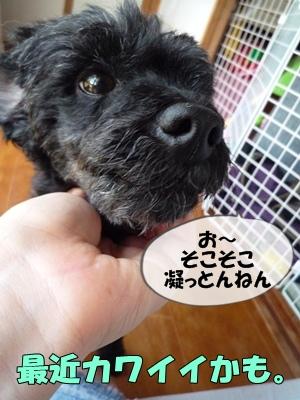 柳沢シンゴP1090103