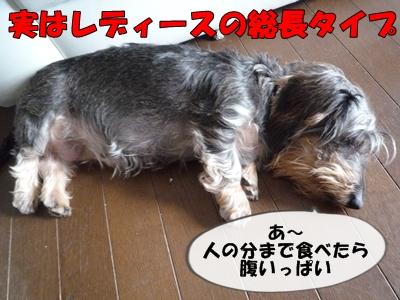 サブ仙人P1120111