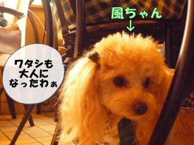風ちゃんP1120968