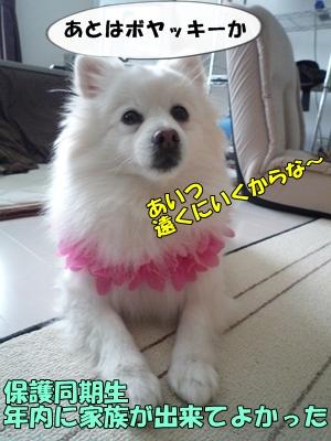 むにょこP1130819