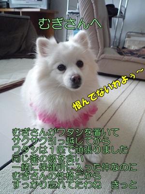 むにょこP1130818