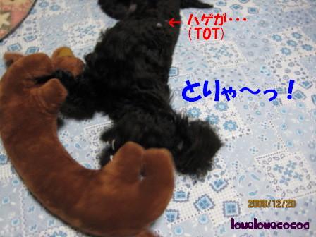 IMG_2552-cocoa.jpg