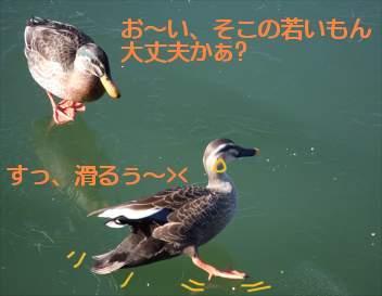 0601kamo2.jpg
