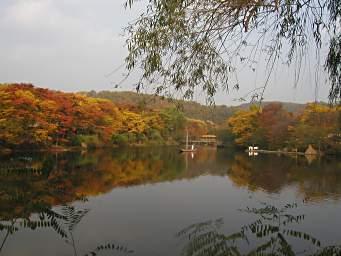 0611korea_kouyou.jpg
