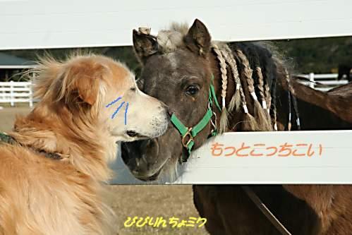 0701katsuura_pony.jpg