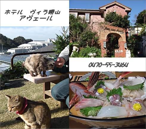 0703katsuyamavira.jpg