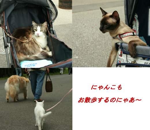 0706mizumotoneko.jpg