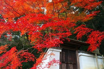 IMGkyoto_0541.jpg