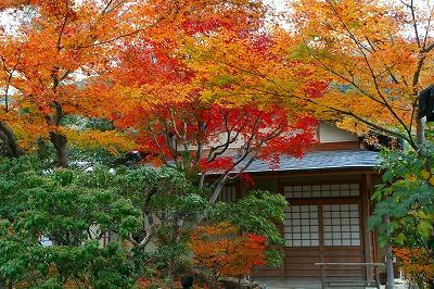 IMGkyoto_0555.jpg