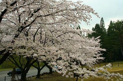 touhoku_0714.jpg