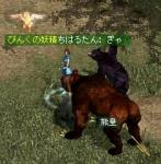ookuma20060125A