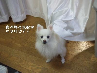 s-DSCF0184.jpg