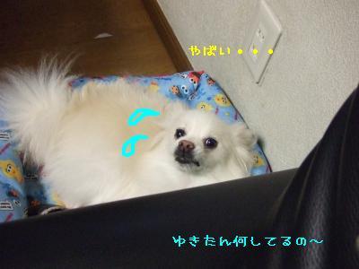 s-DSCF0211.jpg