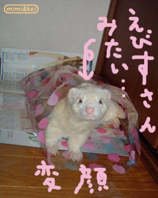 5変顔大河