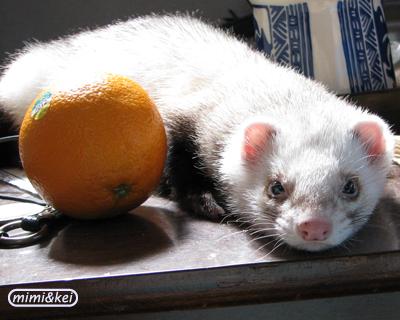 オレンジと多夢2