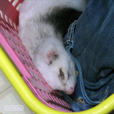 洗濯かごで寝る多夢