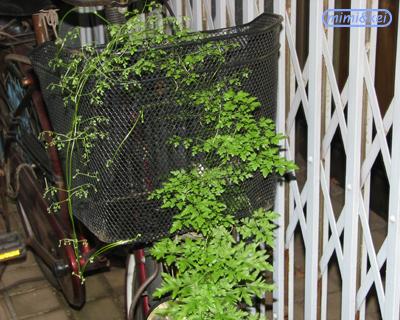 自転車に巻き付く雑草