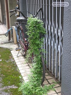 08.08.12自転車雑草撮影