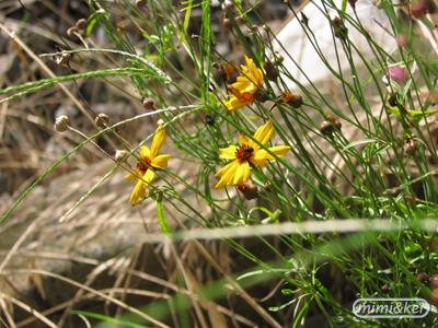 お花と小さい虫