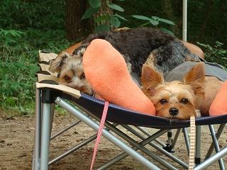 ペットとお昼寝・・・