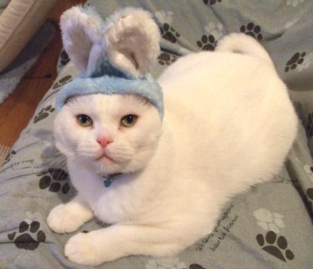 猫展-4_081115