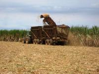 08.11.17 サトウキビの収穫