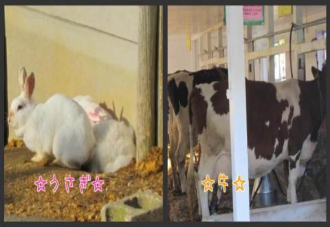 うさぎ&牛♪