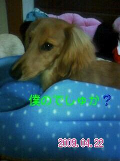 PA0_0009.jpg