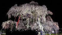 ライトアップされた三春滝桜 正面(2009/04/18 20:45) ISO800