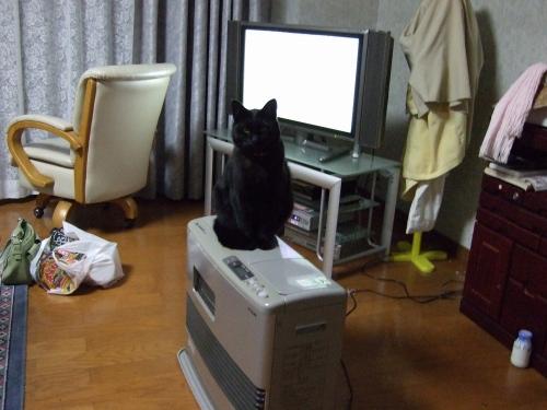 s-2008_10160011.jpg