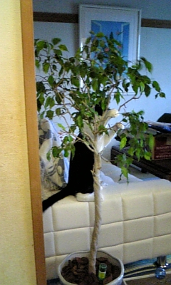 木になるころ