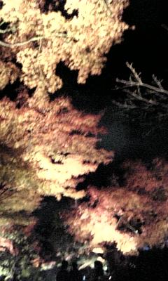 高台寺1128-2