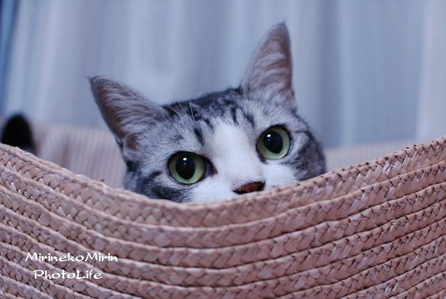 かご猫ミリン2