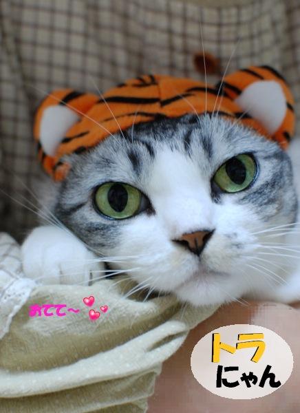 トラにゃん1