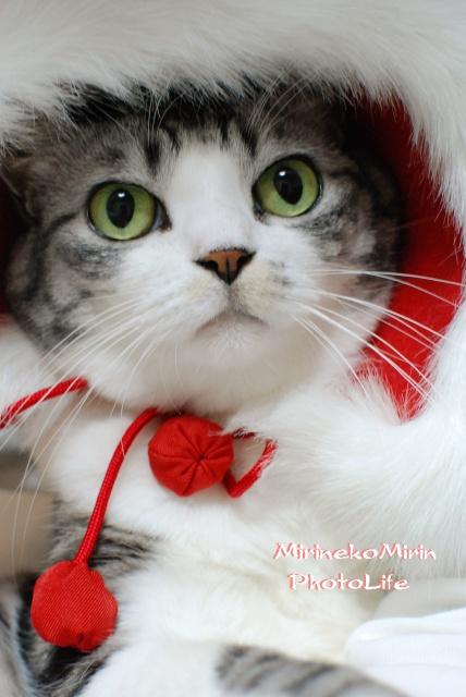 クリスマスケープ1