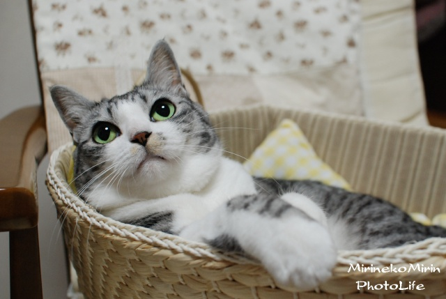 かご猫ミリン