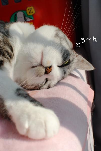 とろける寝顔
