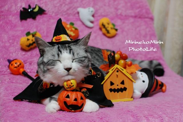 ハロウィン魔女猫