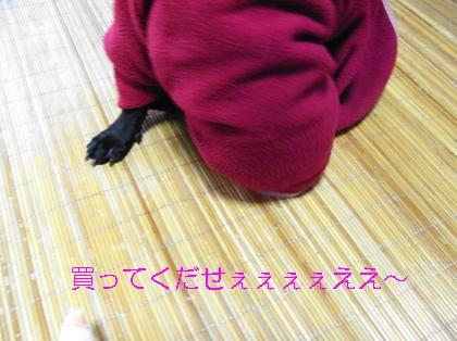 RIMG1262_convert_20080921194041.jpg