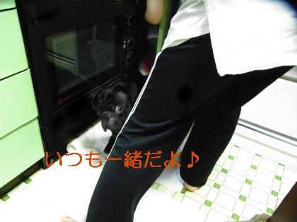 RIMG1287_convert_20080921194501.jpg