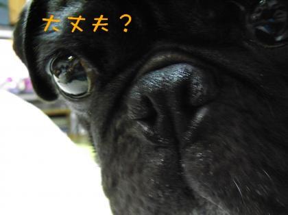 RIMG1349_convert_20081010221524.jpg