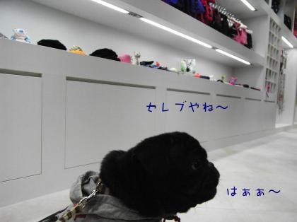 RIMG2915_convert_20081203213924.jpg