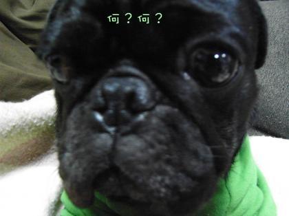 RIMG2981_convert_20081211233108.jpg