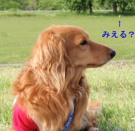 20080619-3.jpg