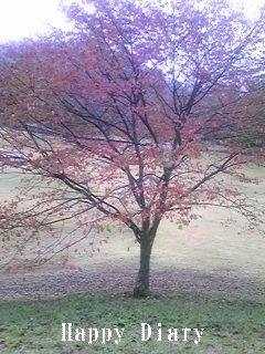 バークレイのコース紅葉