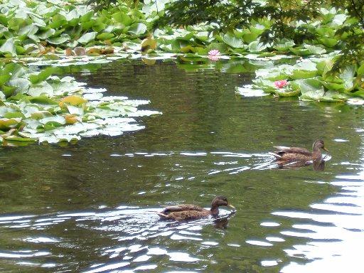 赤レンガの池